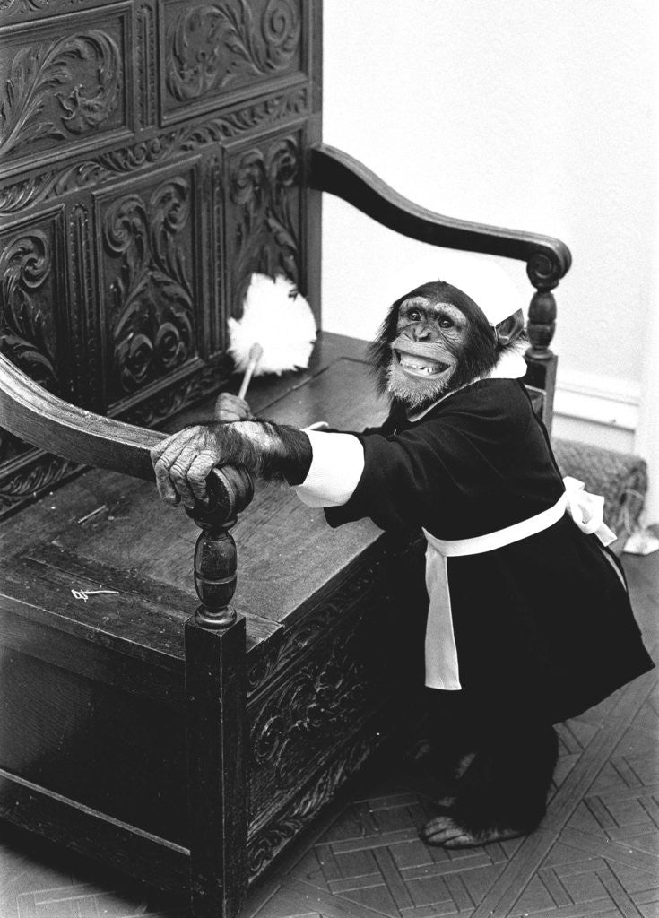 Detail of A Chimpanzee brushing up on the housework by Staff