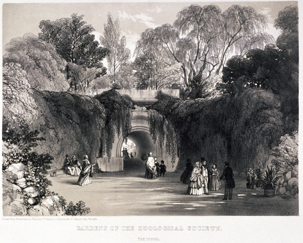 Detail of Zoological Gardens, Regent's Park, Marylebone, London by FW Hulme