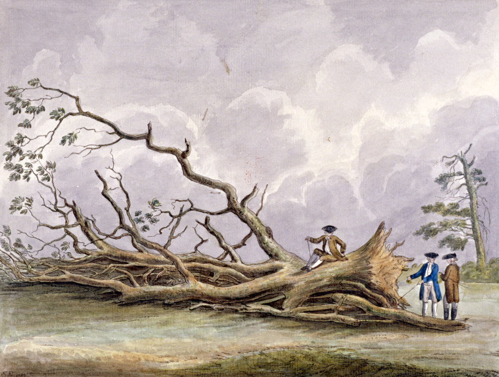 Detail of Trees damaged by a storm of 15th October, Roehampton, London by Edwin Edwards
