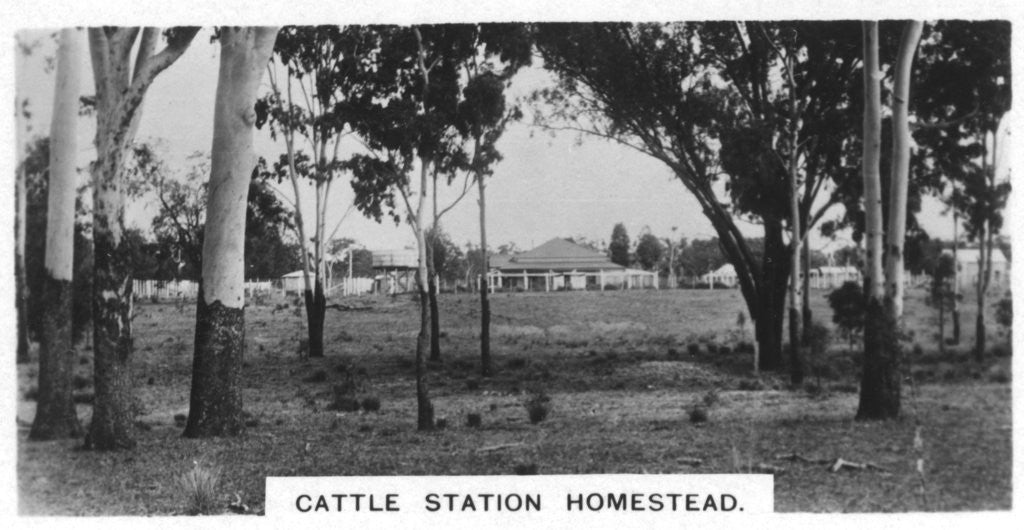 Detail of Cattle station homestead, Australia by Anonymous