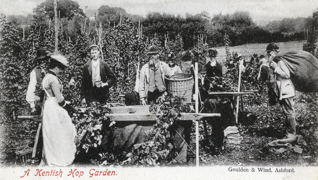 Detail of A Kentish hop garden by Goulden and Wind