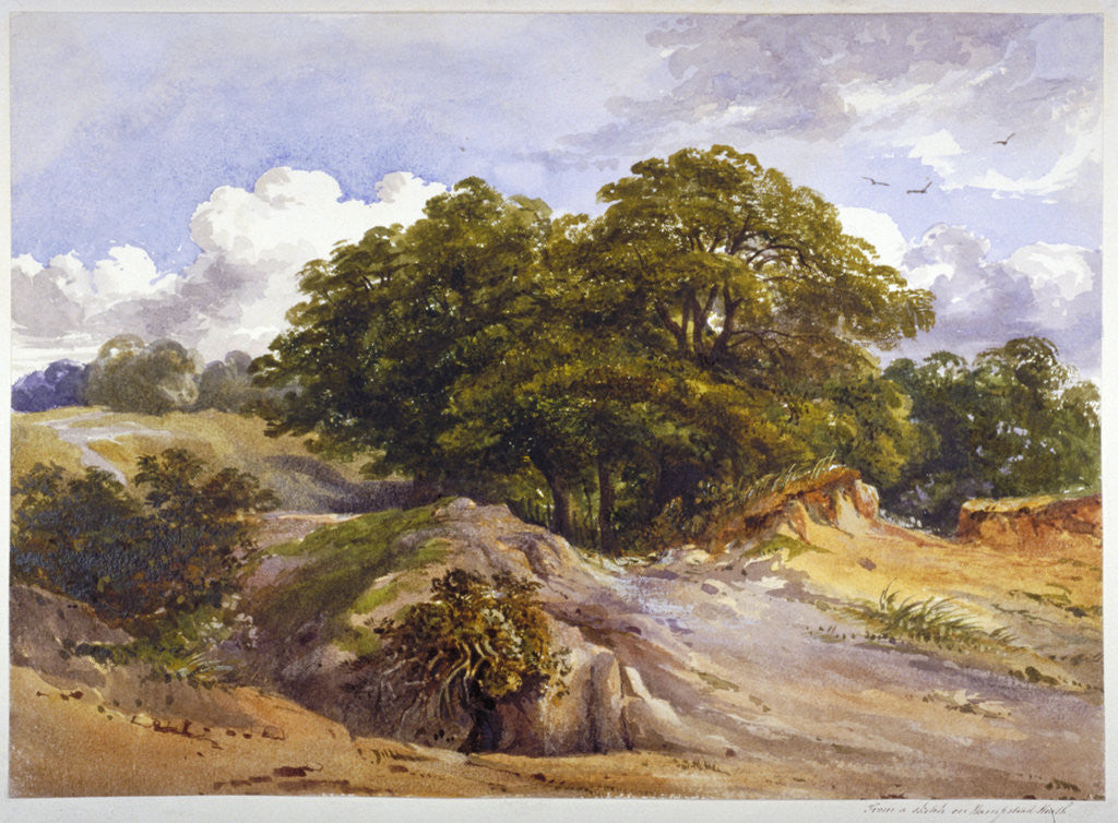 Detail of Hampstead Heath, London by Anonymous