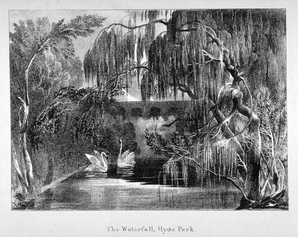 Detail of View of a waterfall and two swans in Hyde Park, London by Anonymous