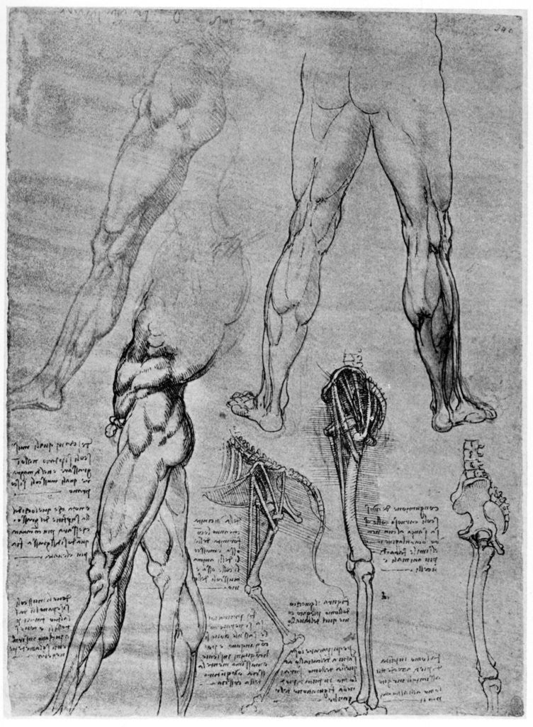 Studies in comparative anatomy posters & prints by Leonardo Da Vinci