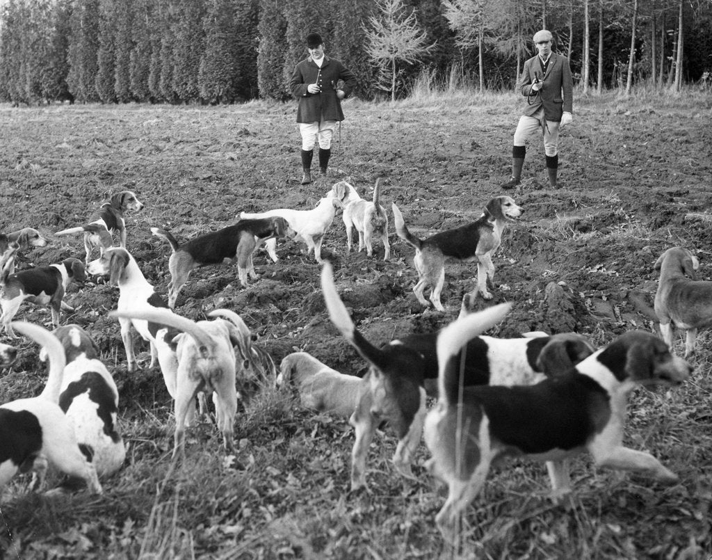 Detail of Hunting with beagles, c1960s by Tony Boxall