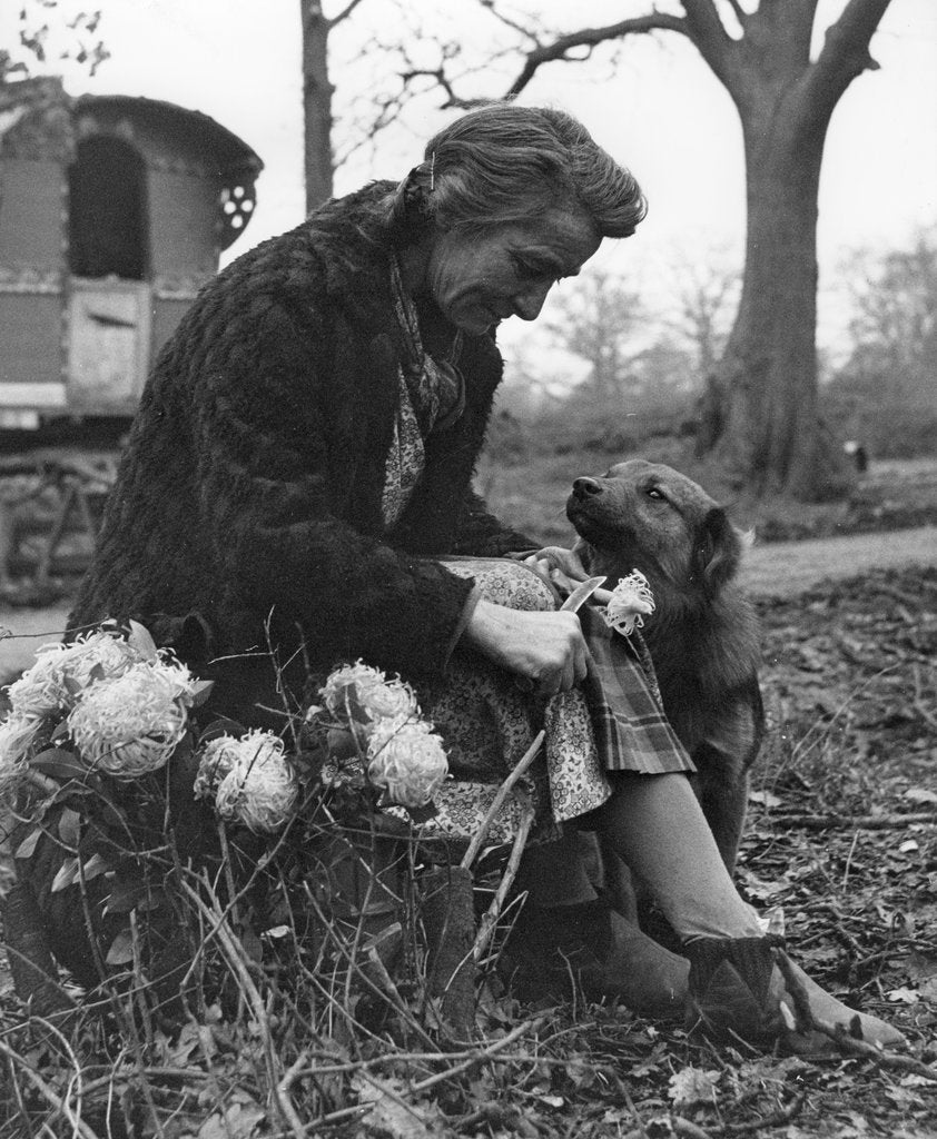 Detail of Gypsy woman with dog, 1960s by Tony Boxall
