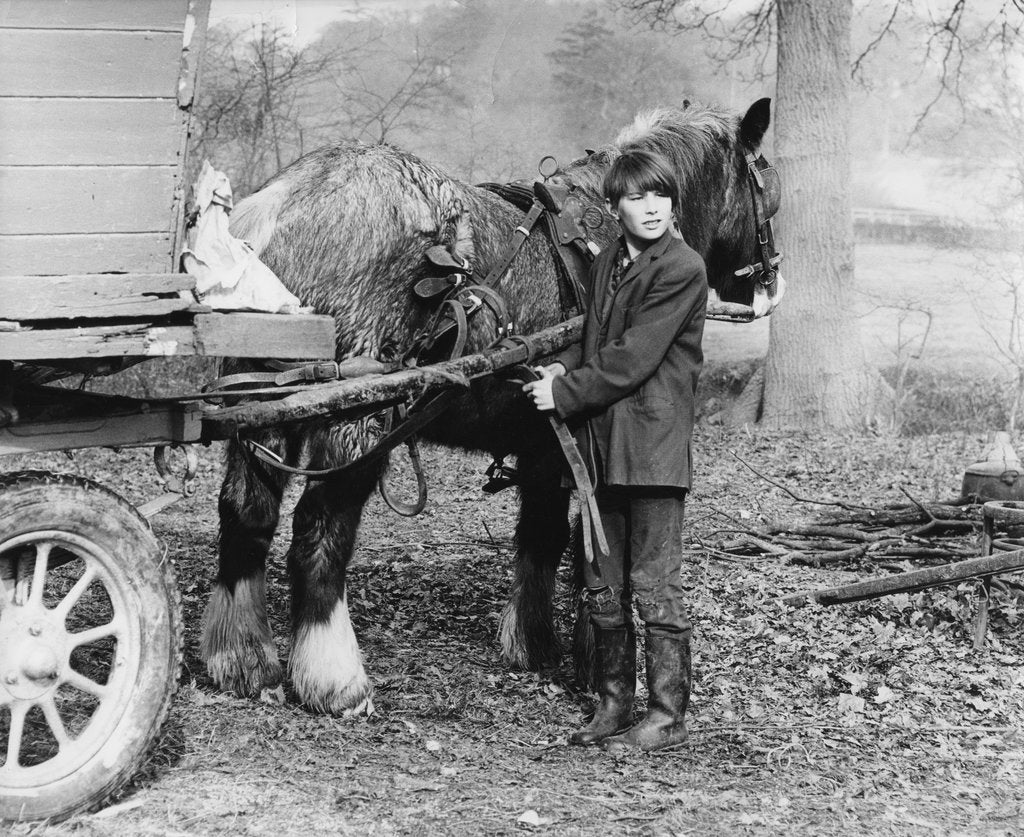 Detail of Young gypsy with a horse, 1960s by Tony Boxall