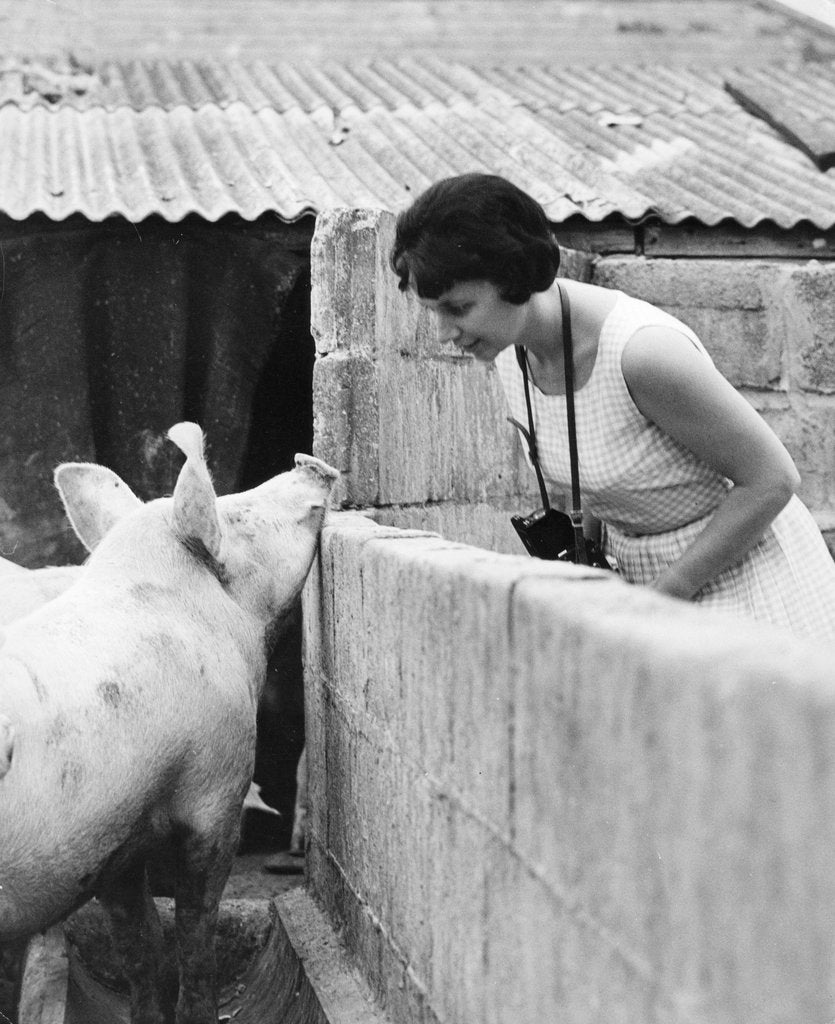 Detail of Woman and pig, 1960s by Tony Boxall