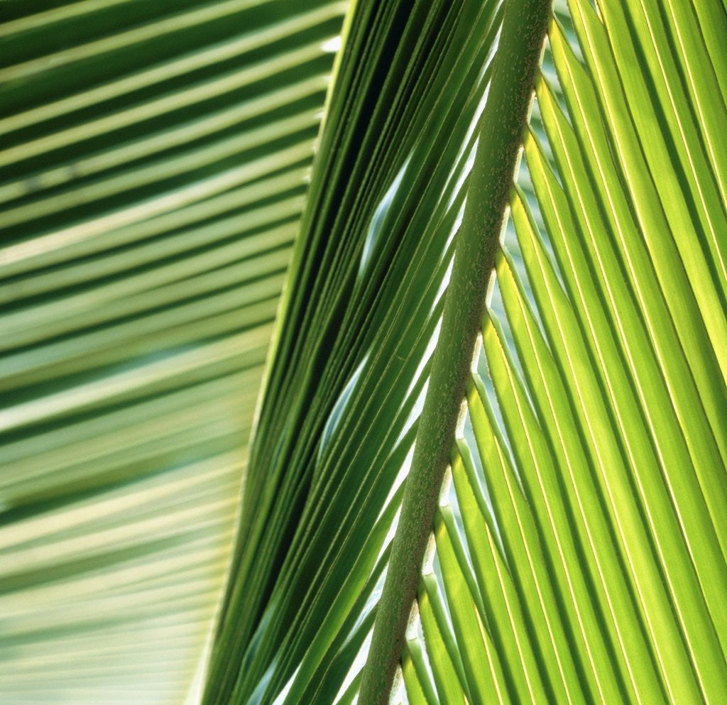 Detail of Frond by Corbis