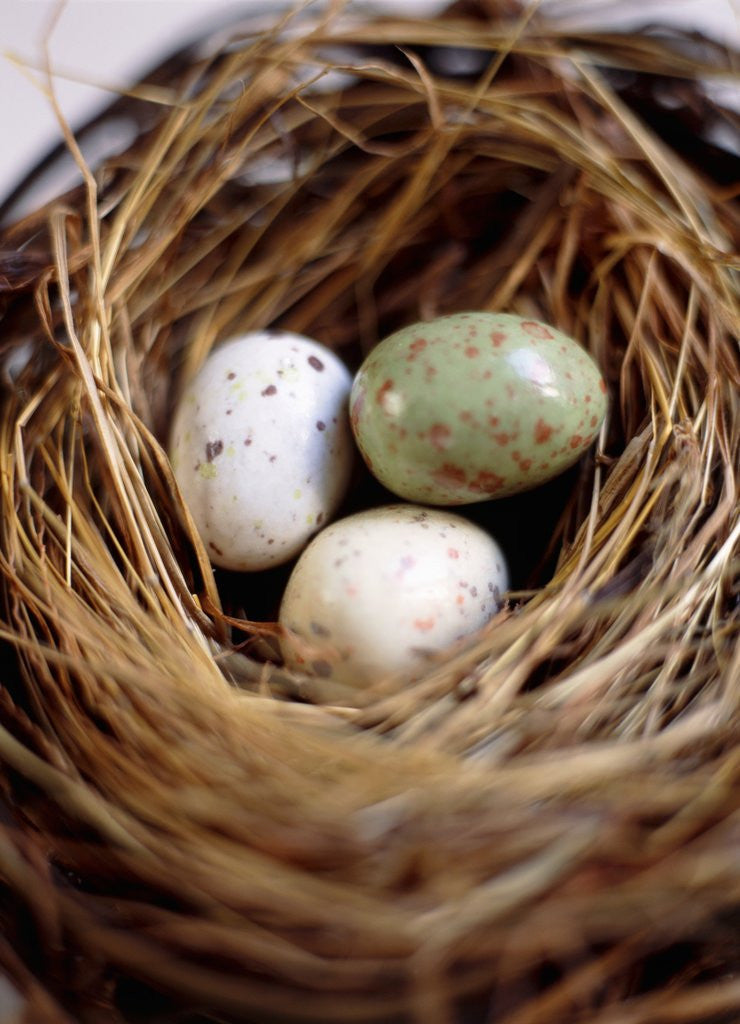 Detail of Eggs in Nest by Corbis