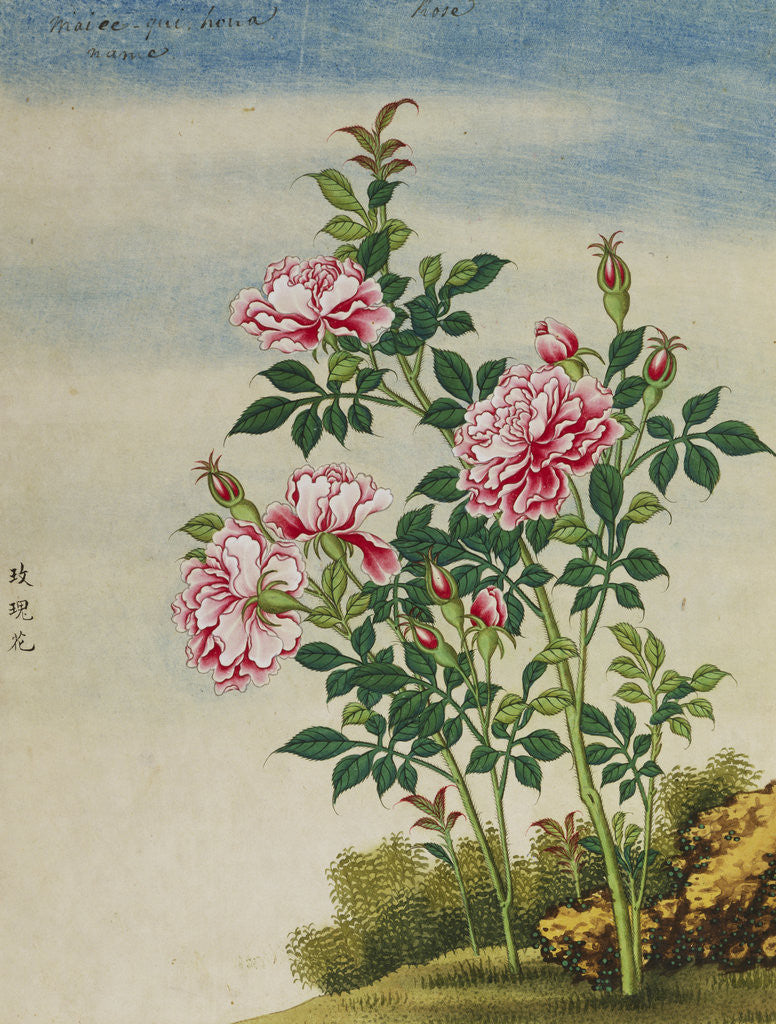 Detail of A Rose Chinese Watercolor by Corbis