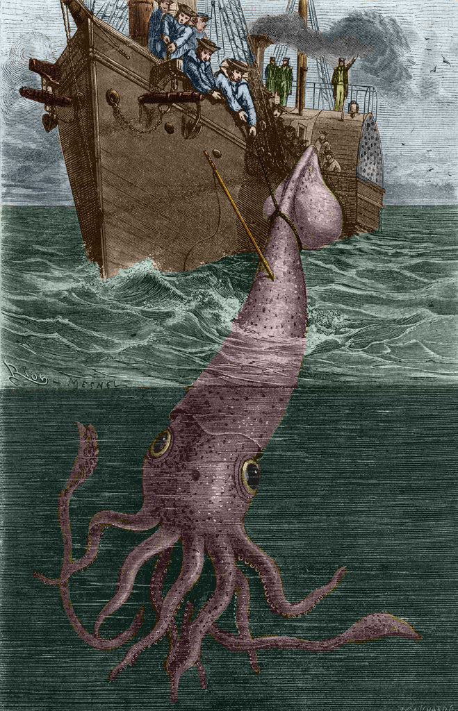 Illustration of the Crew of the Alecton Attempting to Catch a Giant Squid