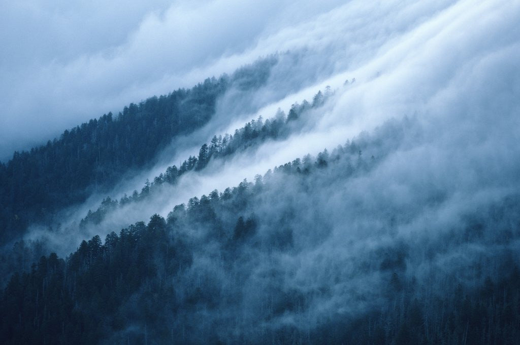 Detail of Fog in the Smokey Mountains by Corbis