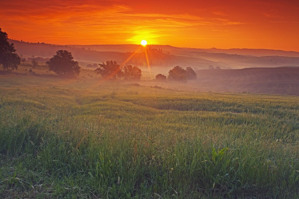 Detail of Farmland at Sunrise by Corbis