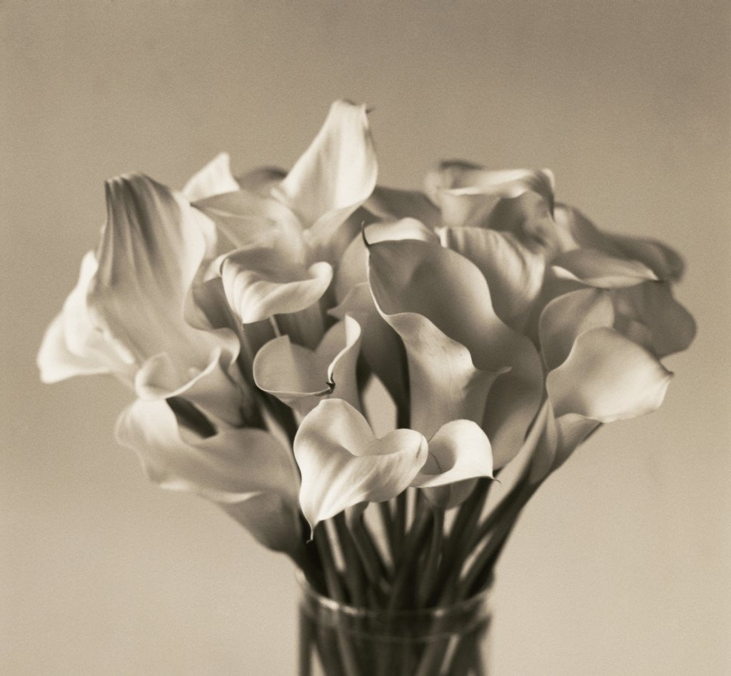 Detail of Calla Lilies in Vase by Corbis