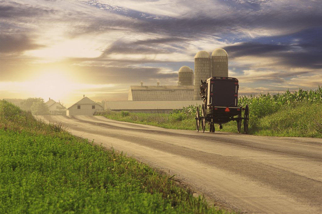 Detail of Amish Buggy on Road to Farm by Corbis