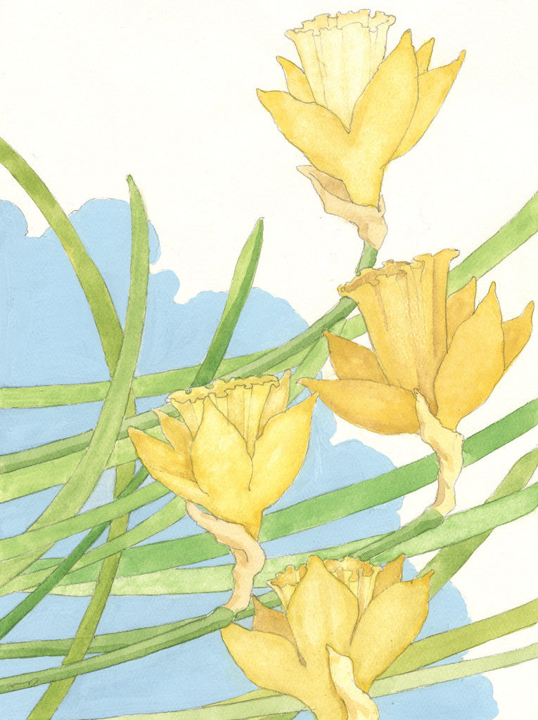 Detail of Illustration of Daffodils by Paul Cline