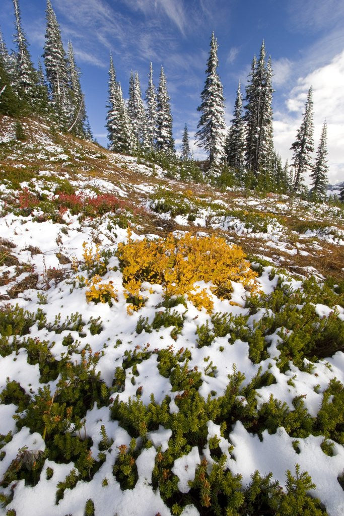 Detail of Snowy Hill at Mount Rainier National Park by Corbis