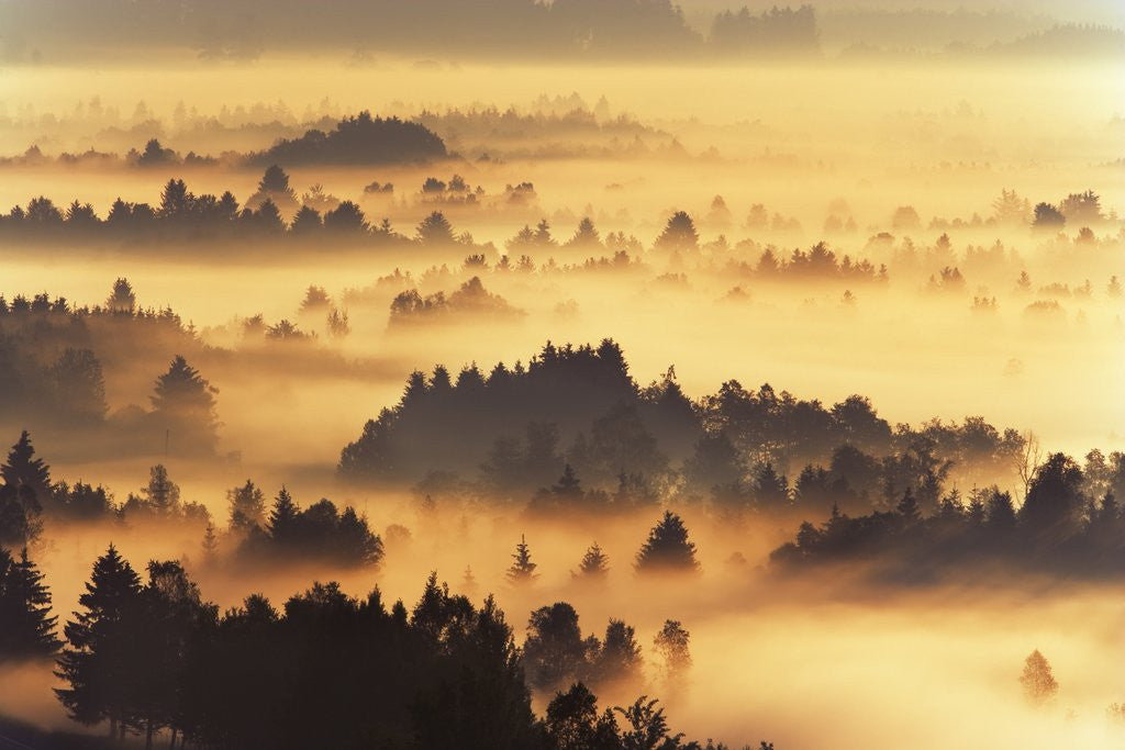 Detail of Forest Landscape at Misty Morning by Corbis