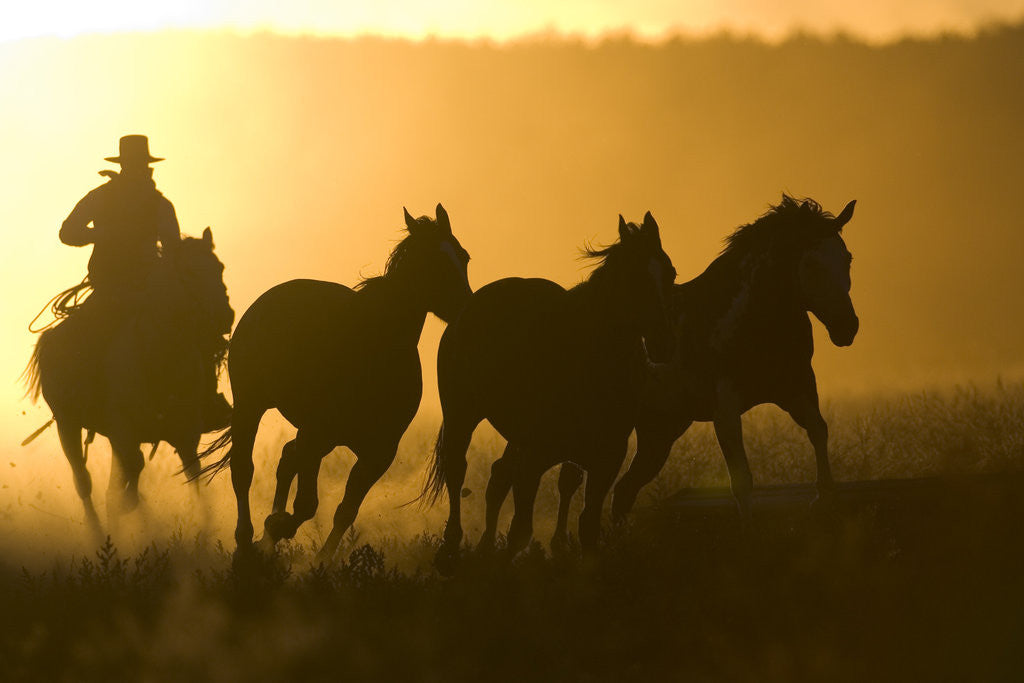 Detail of Silhouette of Cowboy Herding Horses by Corbis
