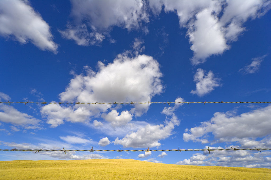 Detail of Barbed Wire Fence, Cumulus Clouds by Corbis
