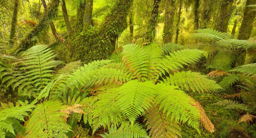 Detail of Forest on West Coast of New Zealand's South Island by Corbis