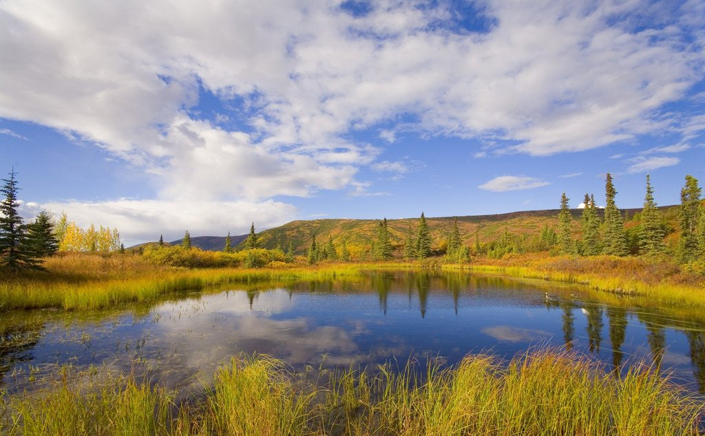 Detail of Cumulus Clouds Above Fall Tundra by Corbis