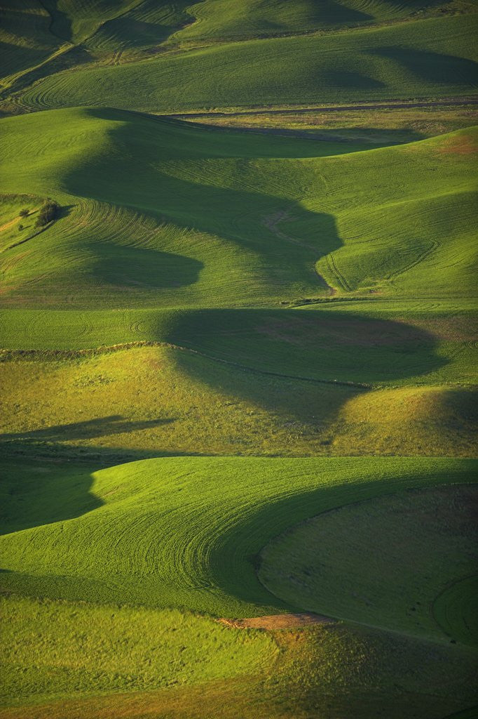 Detail of Green Hills by Corbis