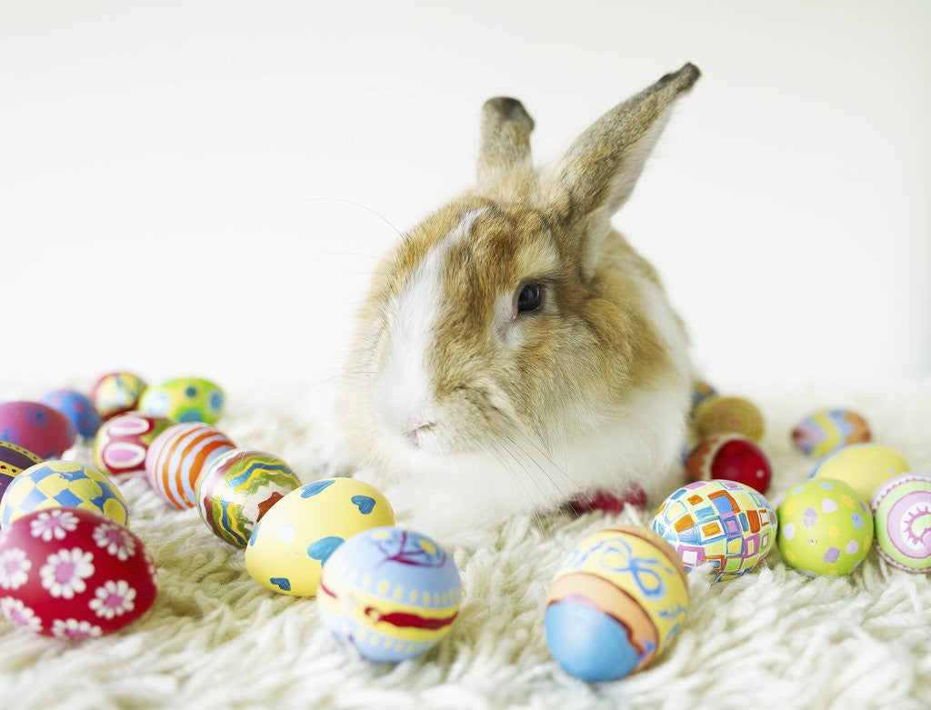 Detail of Bunny Rabbit Sitting Among Easter Eggs by Corbis