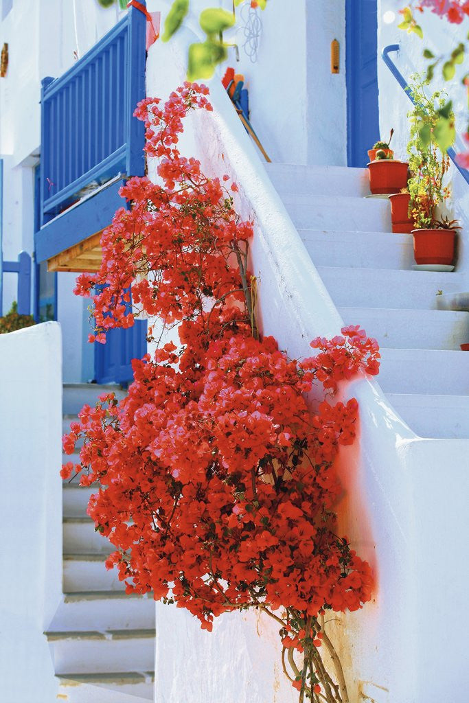 Detail of Flowers Blooming on Stairway by Corbis