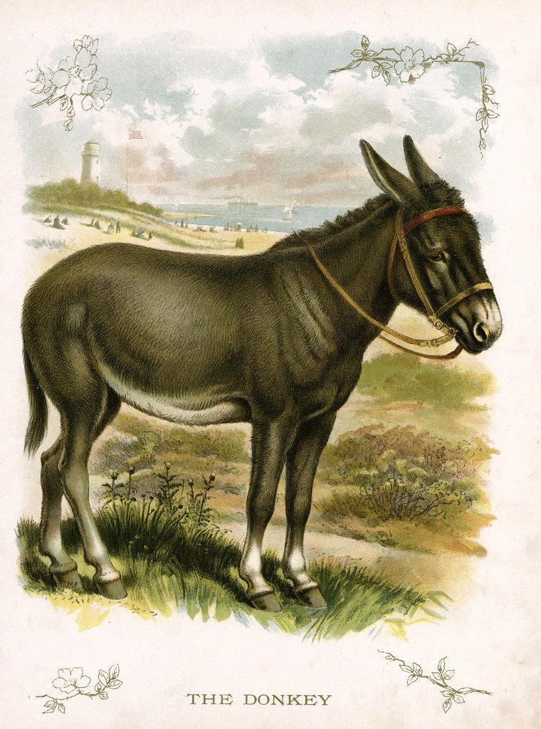 Detail of Illustration of Donkey by Corbis