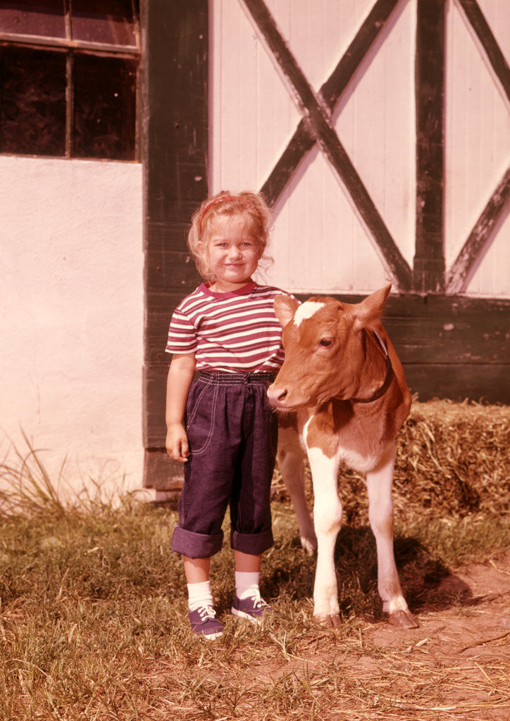 Detail of 1950s 1960s Girl Rolled Up Denim Jeans With Guernsey Calf Outside Barn by Corbis