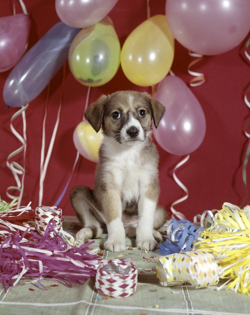 Detail of 1960s Puppy Dog Balloons Party And Colorful Streamers by Corbis