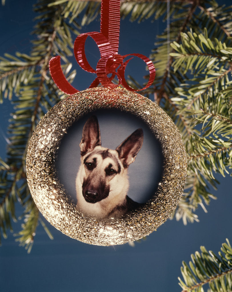 Detail of 1960s 1970s Picture German Shepherd Dog On Christmas Tree Ornament by Corbis