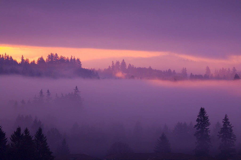 Detail of Fog Over Forest in Oregon by Corbis