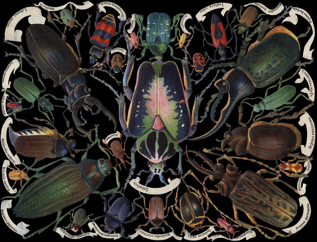 Detail of Die-Cut Scrap with Variety of Beetles by Corbis