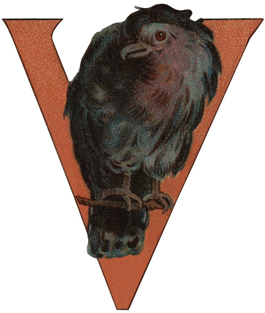 Detail of V Is For Vulture Illustration by Corbis