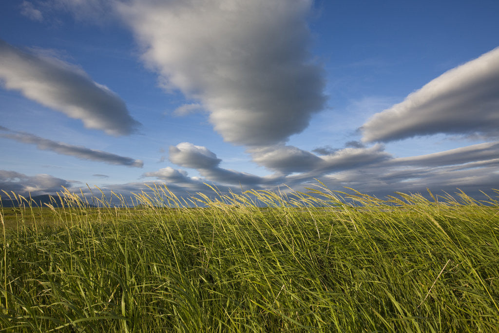 Detail of Coastal Meadow at Hallo Bay in Katmai National Park by Corbis