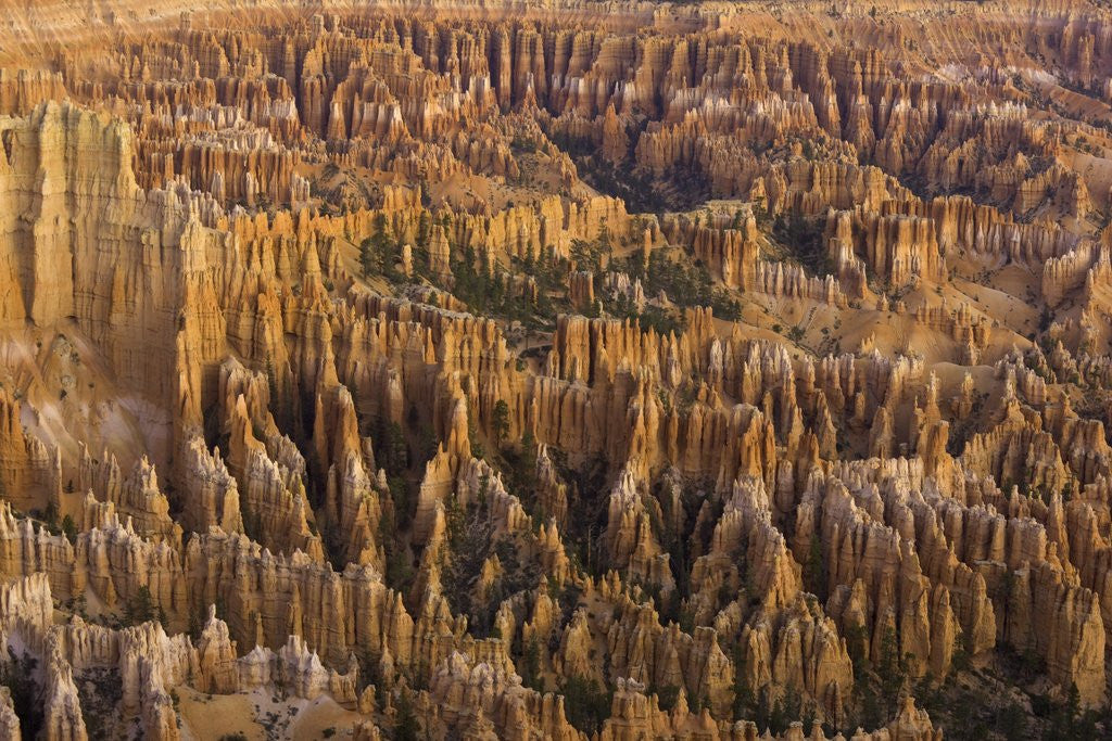 Detail of Hoodoos in Bryce Canyon National Park by Corbis