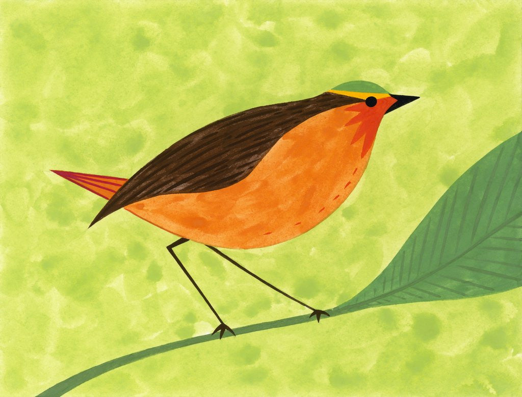 Detail of A Robin on a Branch by Corbis
