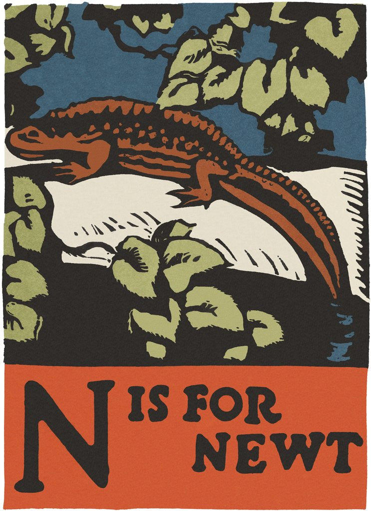 Detail of N is for newt by Corbis