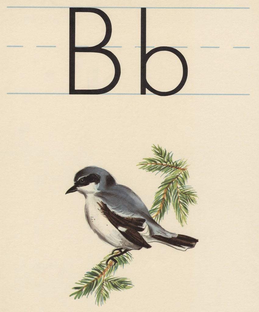 Detail of B is for bird by Corbis