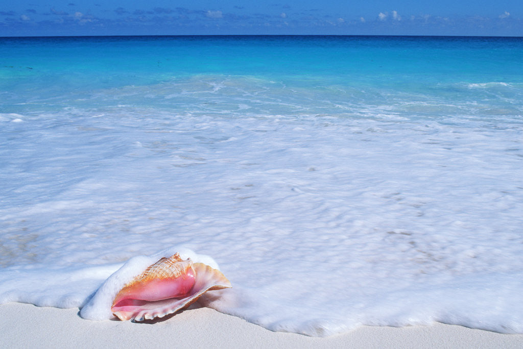 Detail of Mexico, Yucatan Peninsula, Carribean Beach at Cancun, Conch Shell on Sand by Corbis