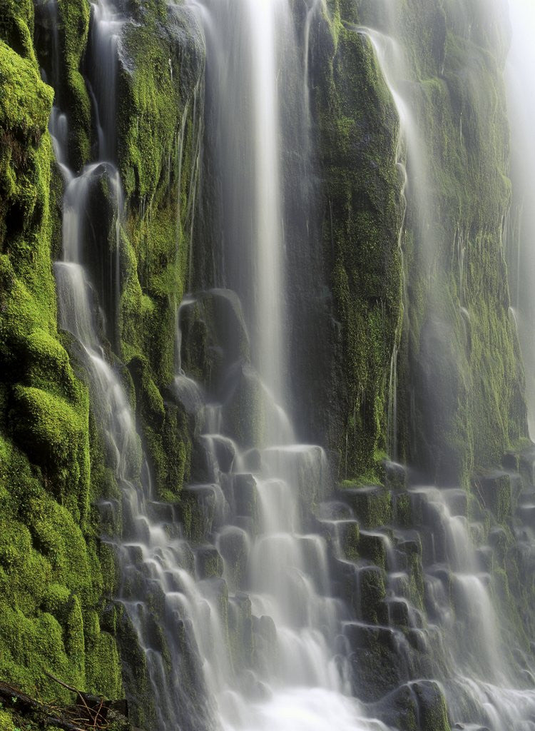 Detail of USA, Oregon, Proxy Falls - Waterfall Details by Corbis