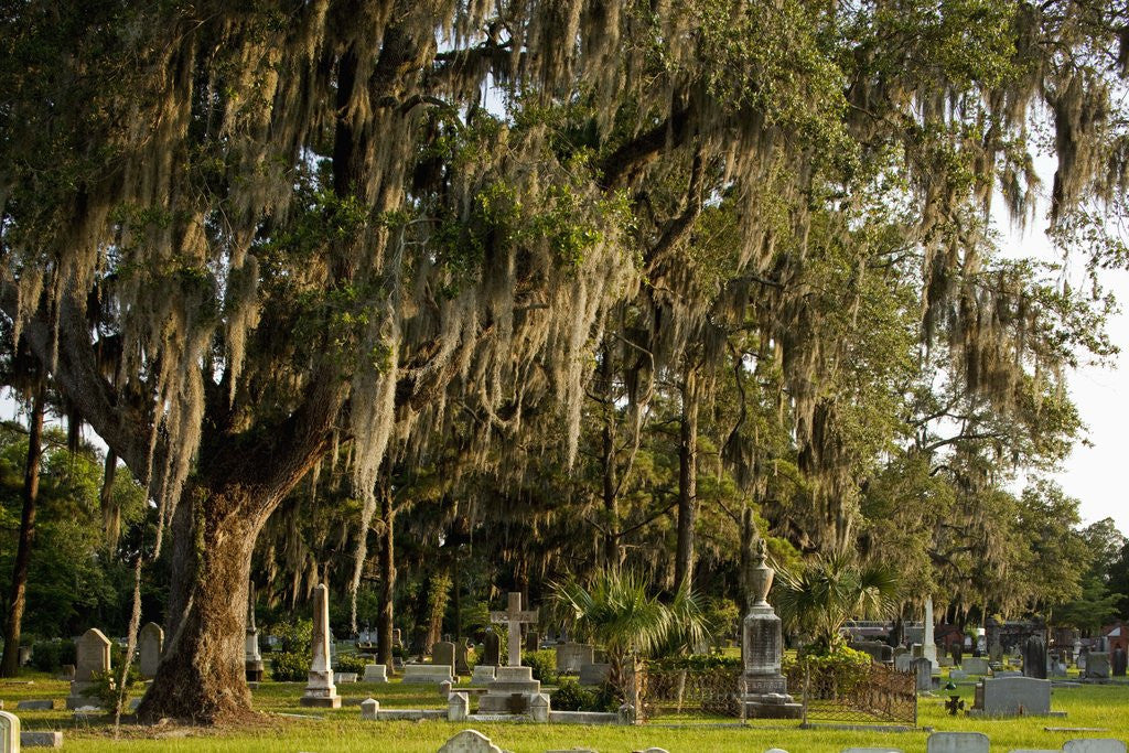 Detail of Gravestones and trees draped in Spanish Moss in Bonaventure Cemetery, Savannah, Georgia by Corbis