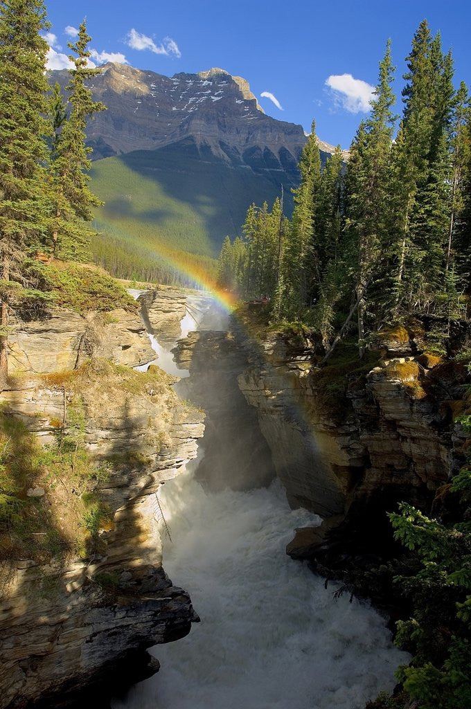 Detail of A vertical image of the Athabasca falls on the Athabasca river with a colorful rainbow and Mount Kerkeslin looming above all. by Corbis
