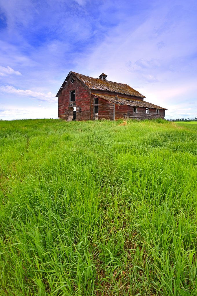 Detail of Abandoned red barn sitting on the top of a hill on a pioneer homestead in rural Alberta Canada by Corbis