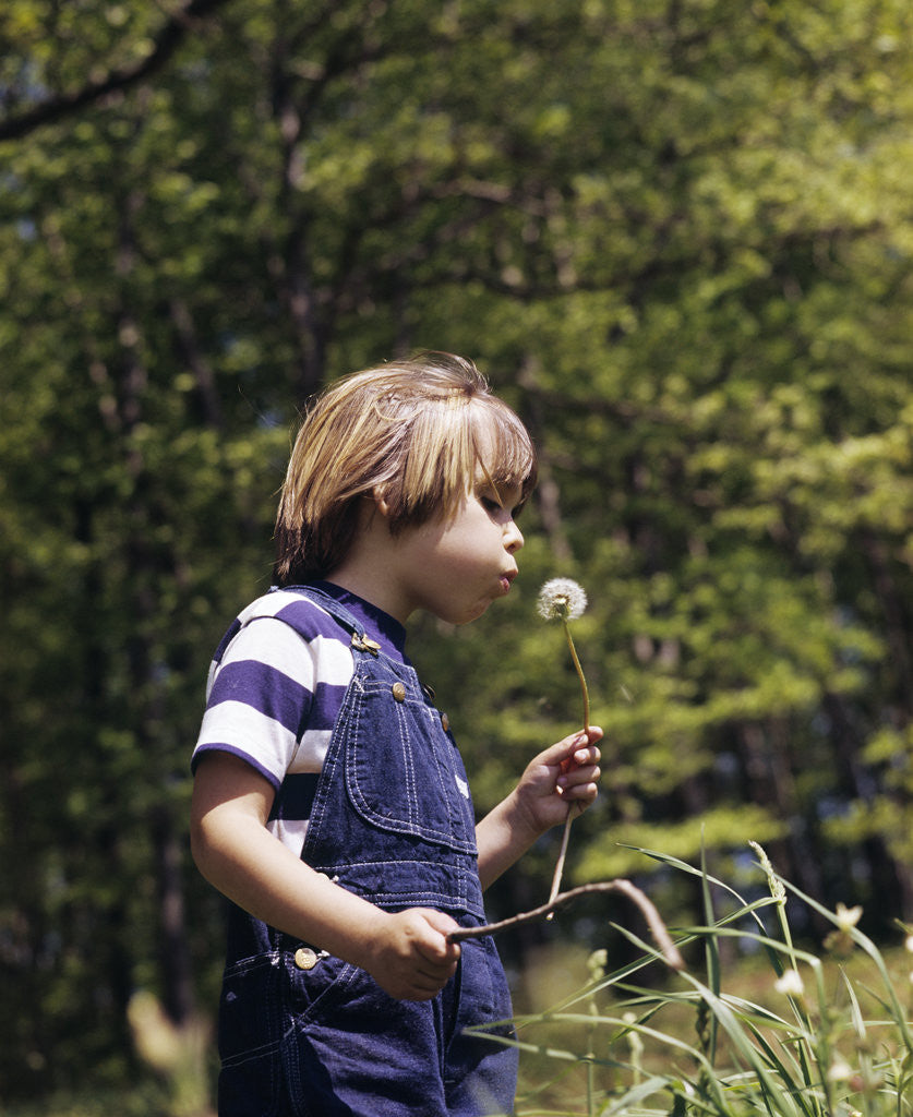 Detail of Boy wearing bib overalls blowing on dandelion head by Corbis