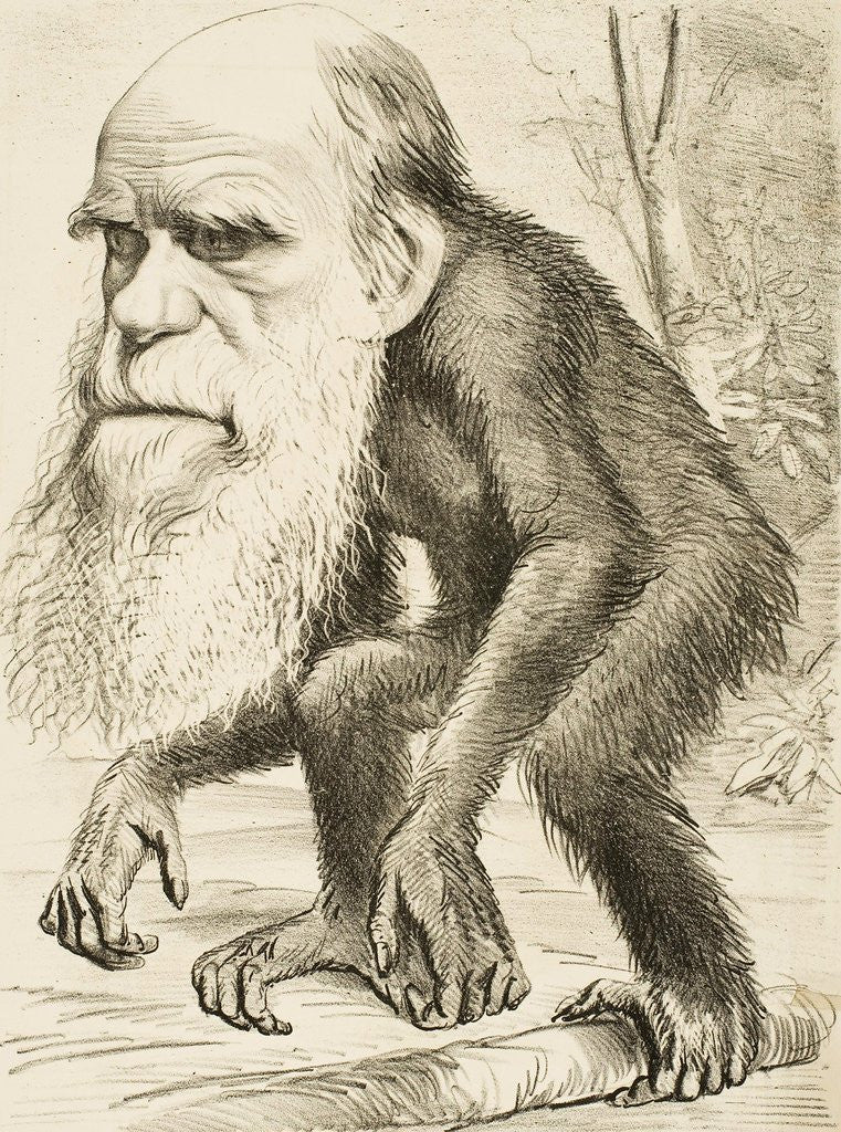 Detail of Caricature of Charles Darwin by Corbis