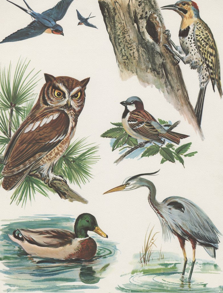 Detail of Variety of birds by Corbis